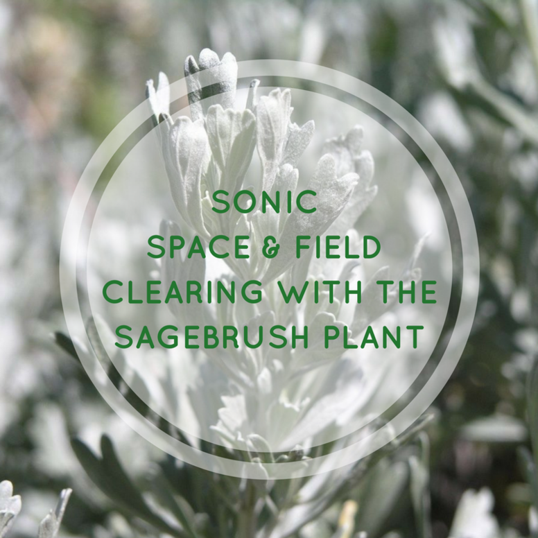 Sonic Space & Field Clearing with the Sagebrush Plant