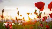 Mindfulness Meditation (16 min).mp4