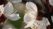 Meditation Flora 15:00.mp4