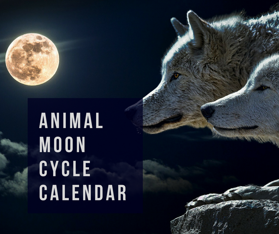 animal moon cycle calendar