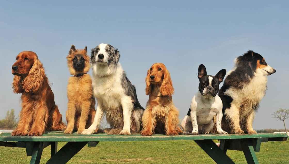 stockfresh_1463141_five-little-dogs_sizeM.jpg
