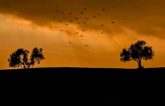 flock of birds trees sunset.jpg