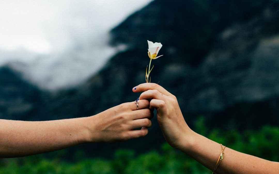 Image | Blog | Blank Image Hand Holding Flower