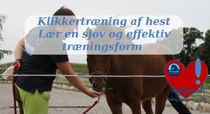 Klikkertræning af hest - onlinekursus