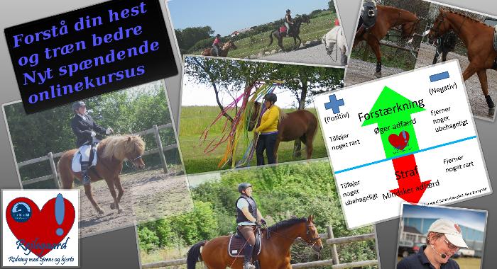 Forstå din hest og træn bedre - online kursus