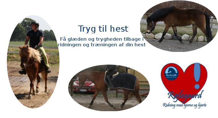 Tryg til hest kursus