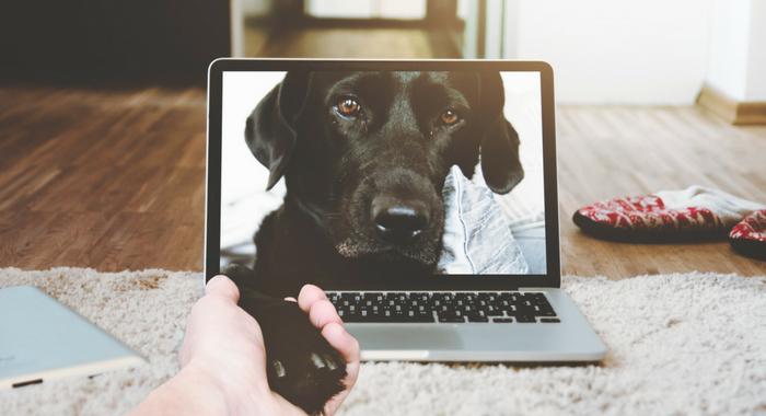 Hundeklubben Online