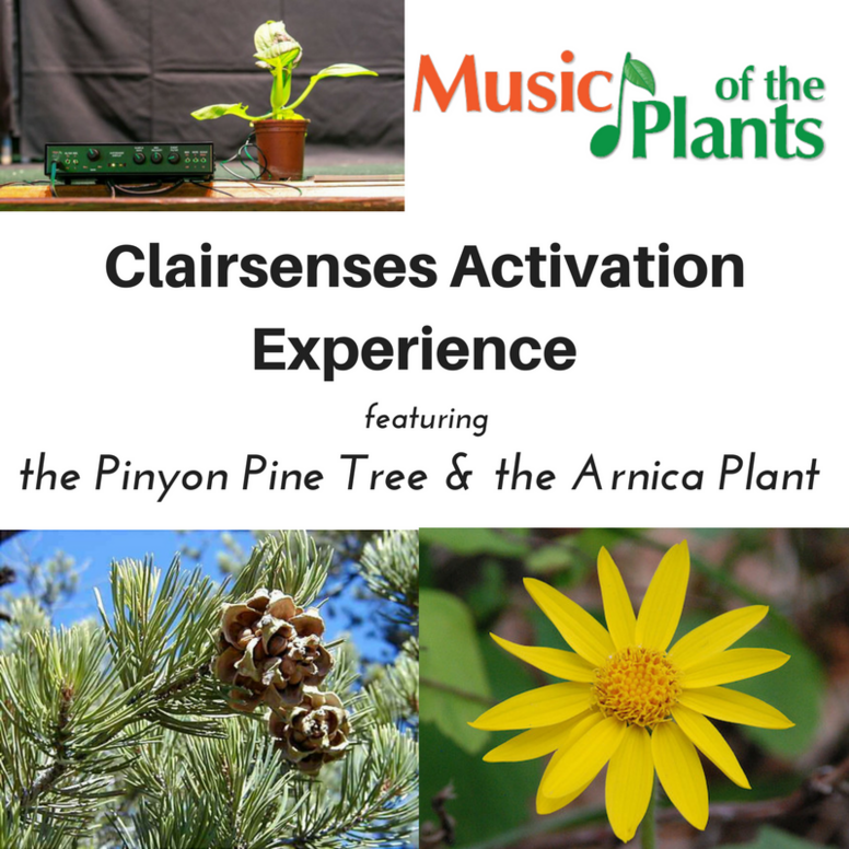 Music of the Plants: Clairsenses Activation Journey