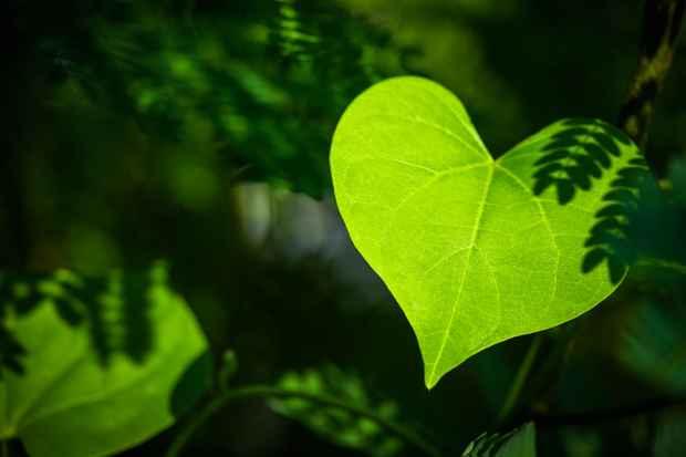 Hjerteblade.jpg