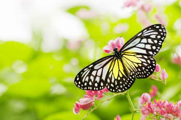 Butterfly-that-stands-out-from-background-800x531.jpg
