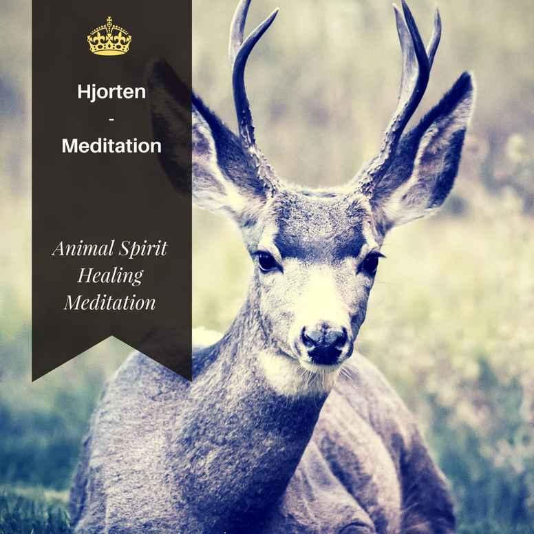 Animal Spirit Hjorten meditation