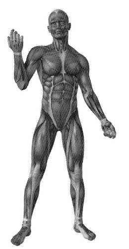 E-Medicus UPDATE - Anatomi-Fysiologi-Patologi