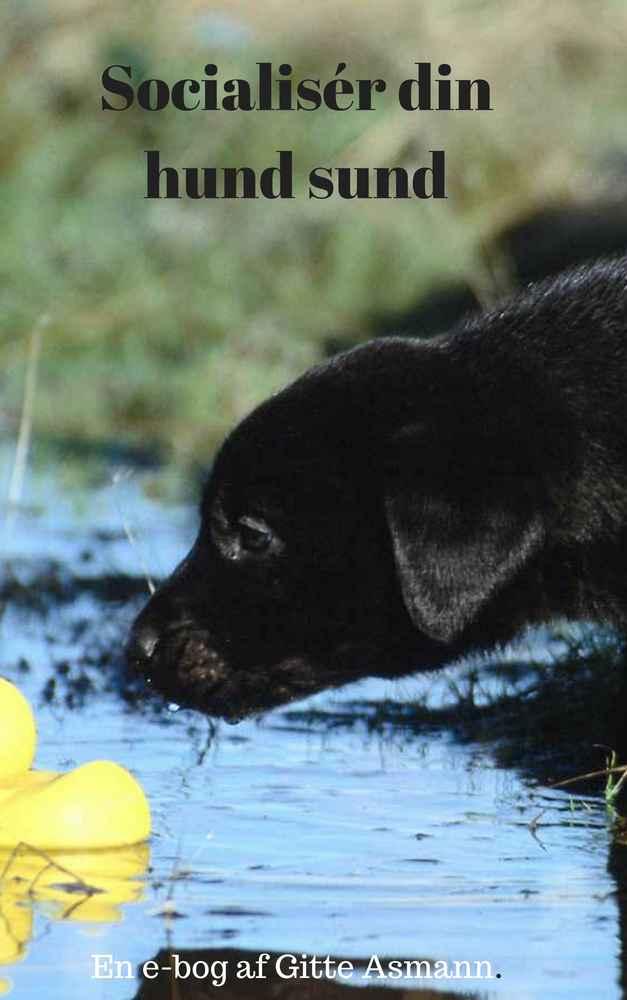 Socialisér din hund sund. En e-guide, der gør din hund mere tryg i hverdagen