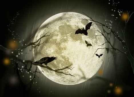 halloween-72939__340.jpg