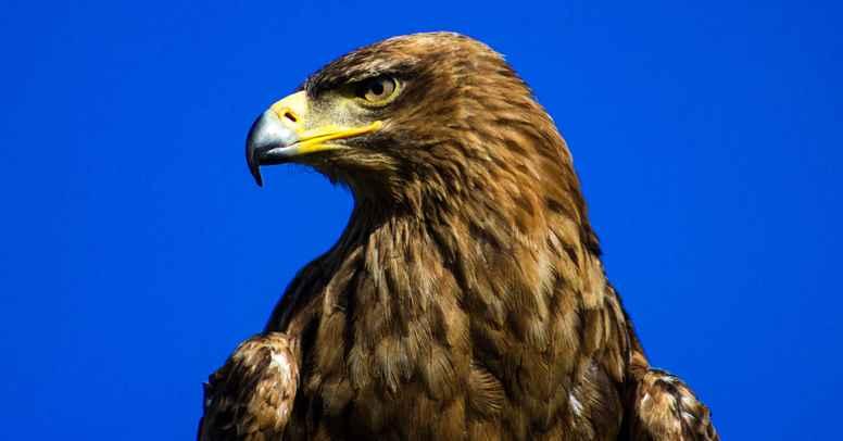 Ørnens totemkraft: Visdom og frihed - guidet af Hvide Ørn