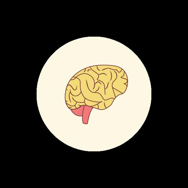 Hjerne.png