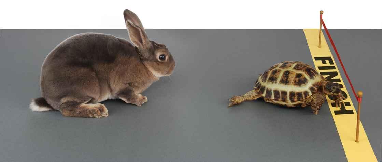 Kanin og skilpadde væddeløb.jpg
