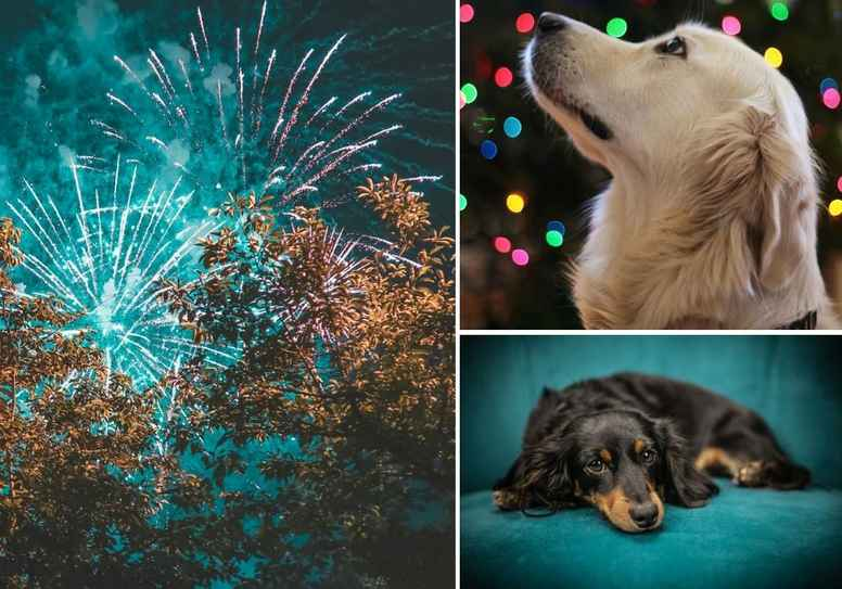 En lugnare nyårskväll med hund