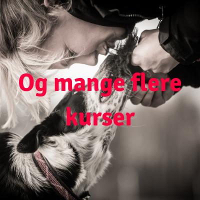 NÆSEPRØVEN (1).png