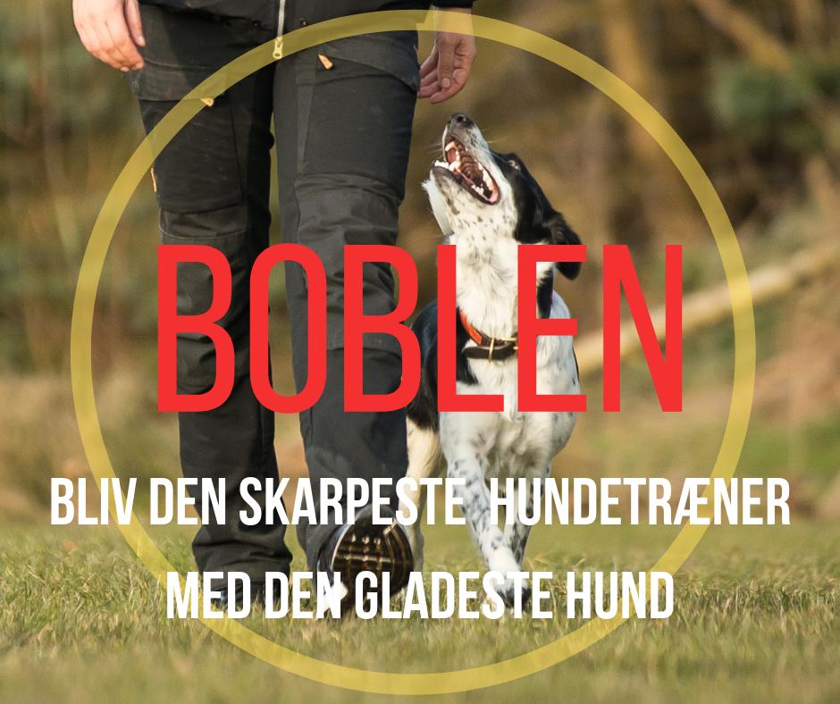 Kopi af VIL DU BLIVE DYGTIGERE TIL AT TRÆNE HUND (3).png