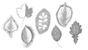 Planetenbäume Blätter PS 1920x1080 Alle