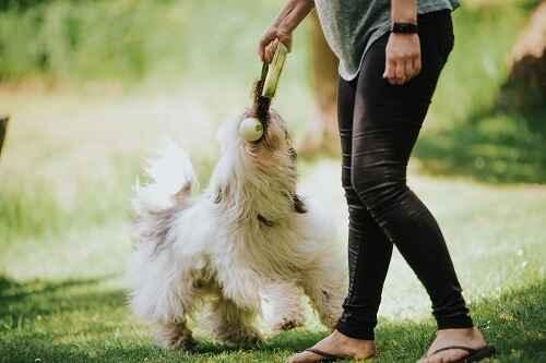 powerdog hundetræning nose work