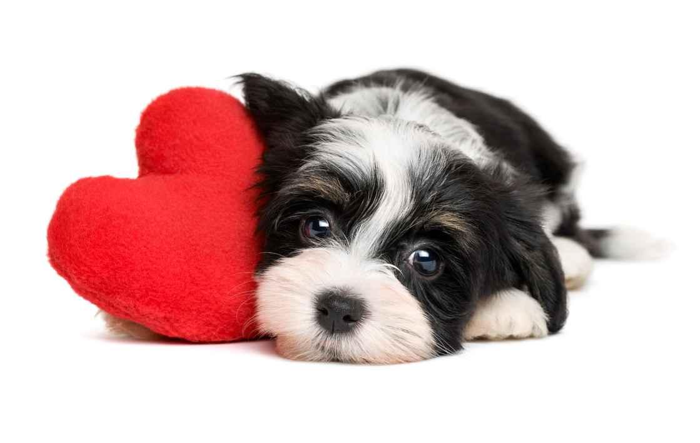Nuttet hund med hjerte