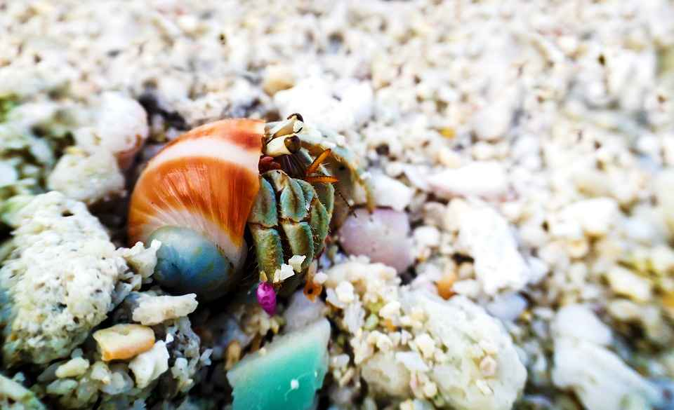 I Have a Case of The Hermit Crabs(12).jpg