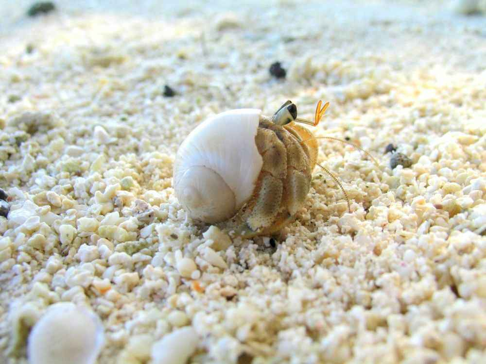 I Have a Case of The Hermit Crabs(20).jpg