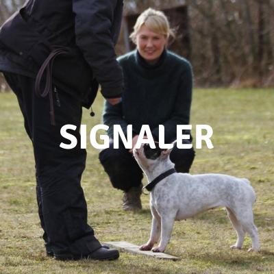 SIGNALER.png