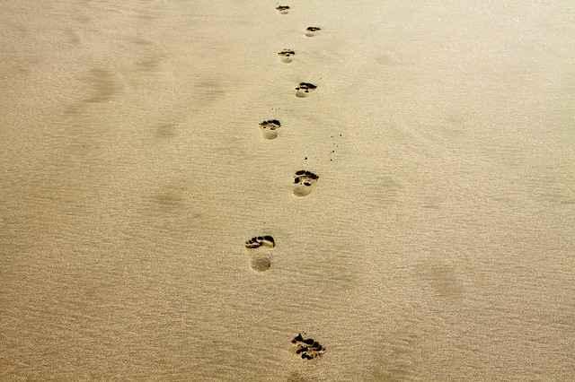 footprint-1021452_640.jpg