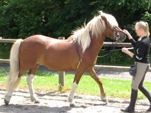 Sunde-og-raske-heste1-300x225.png