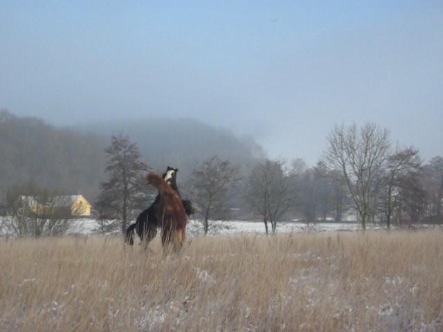 Vinterens-krudttønder-2