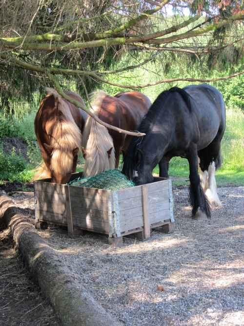 Et-godt-hesteliv-høstation