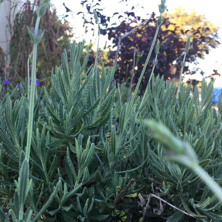 Sacred Healing Garden Meditative Journey