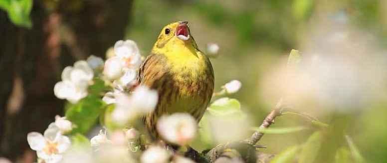 Stillevandring ved Møns Klint - fold din stemme ud med naturen som resonans den 31.8