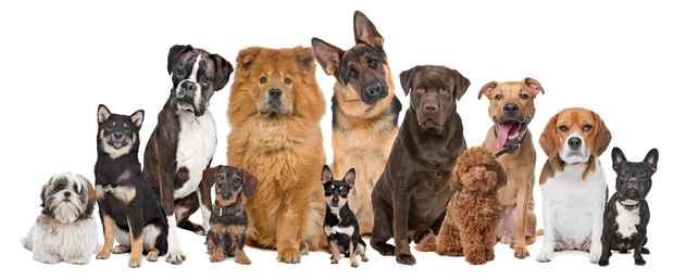 hunde-der-lytter