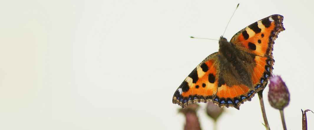 1159-meditation-sommerfugl-karina-bundgaard-2880x1200.jpg