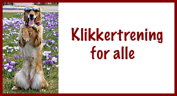 Klikkertrening for alle