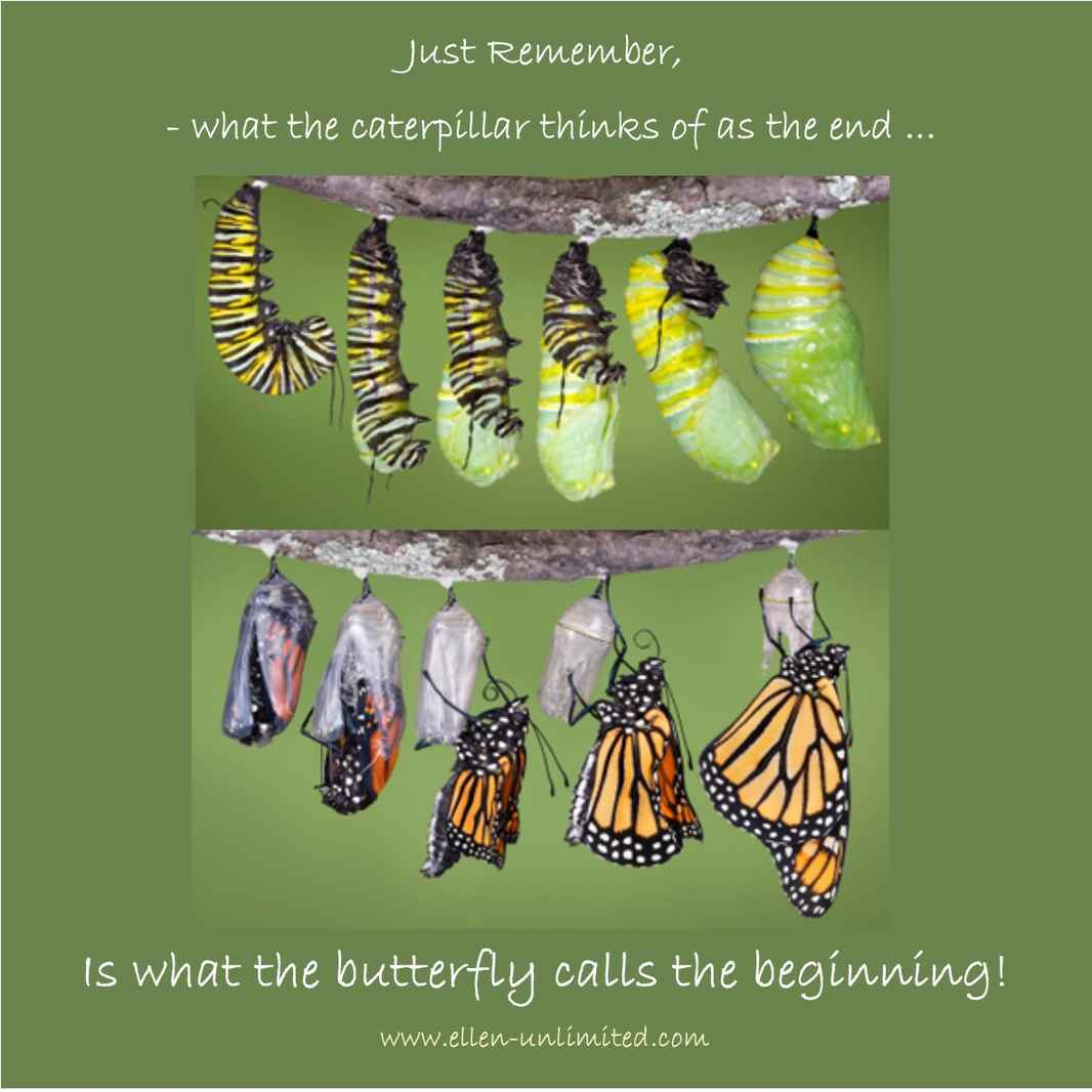 Art quote butterfly beginings