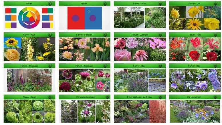 Farver i haven