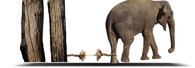 elephant-free