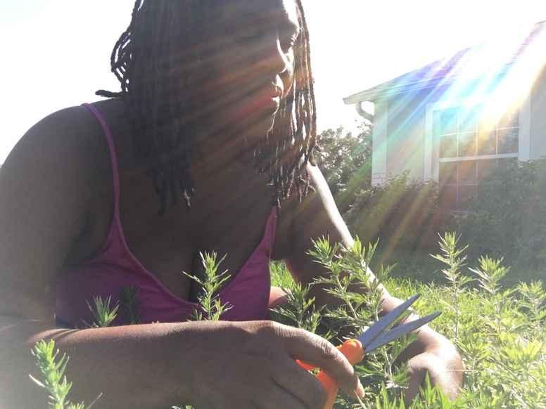Intuitive Herbal Mentor