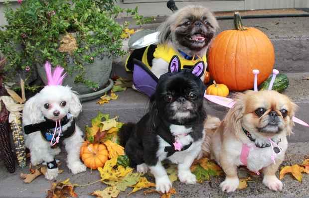 1192-happy-halloween-hund.jpg