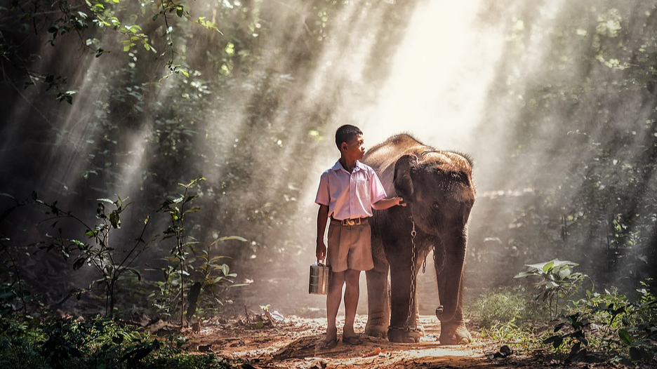 Boy with elephant