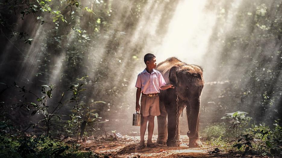 Boy with elephant