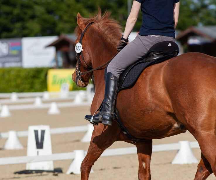 horse-4194924_1920
