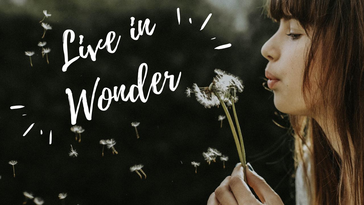 Rebecca - WONDER.png