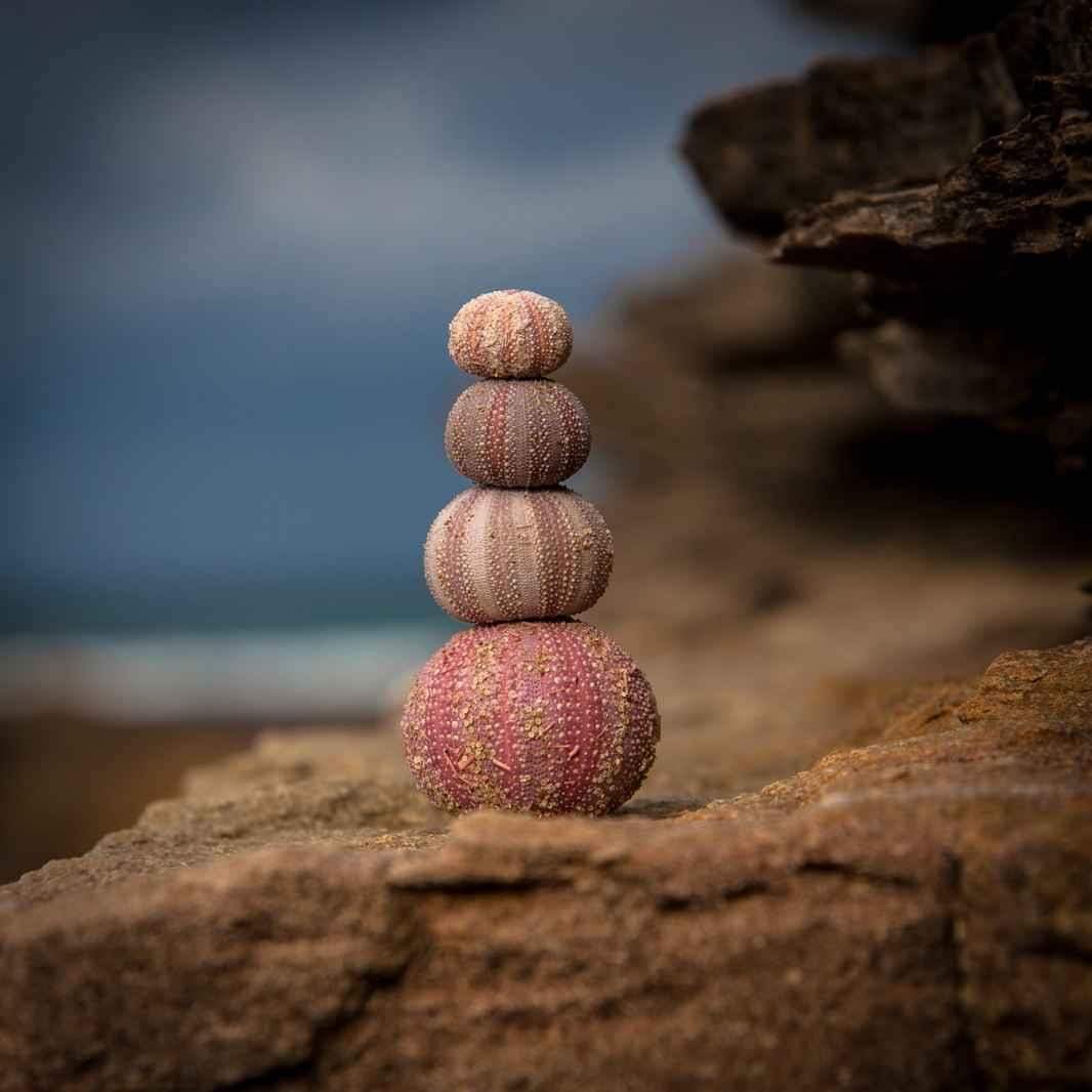søanemoner balance.jpg