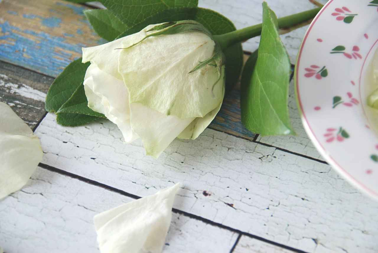Diy rozenwater de beste toner voor je gezicht